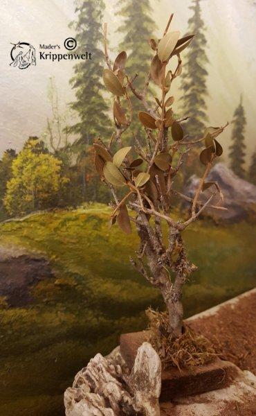 dieser Baum passt perfekt zu ihr  Krippenbotanik