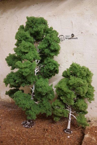 schöne Birken für ihre Krippenbotanik
